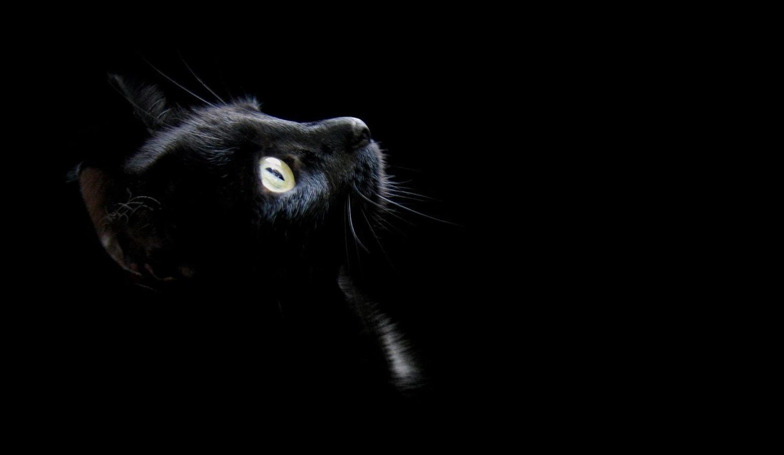 O zločestim zmajevima, crnim mačkama i… jednoj pomrčini